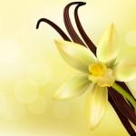 The Romance of Vanilla