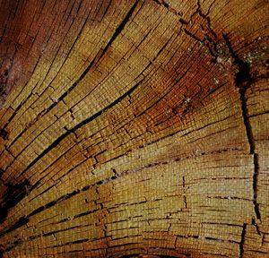 tree-rings