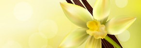 Vanilla pod with flower